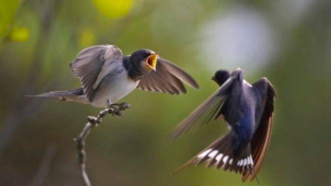 Birds - BBC