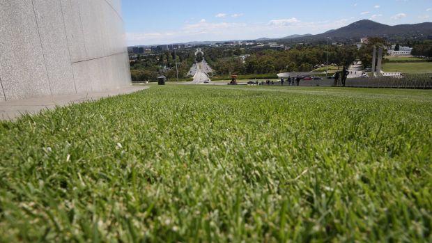 Grass - SMH