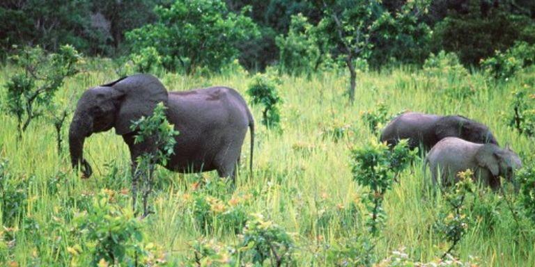 Elephants - Le Monde