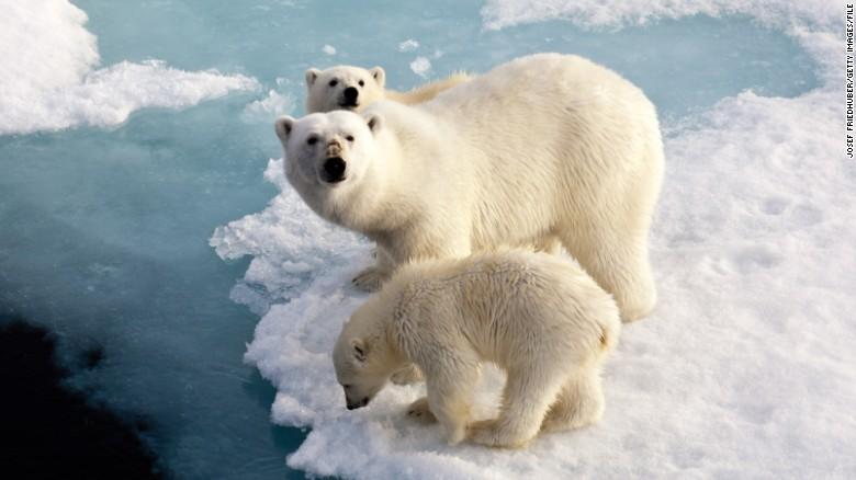 Polar bears - CNN