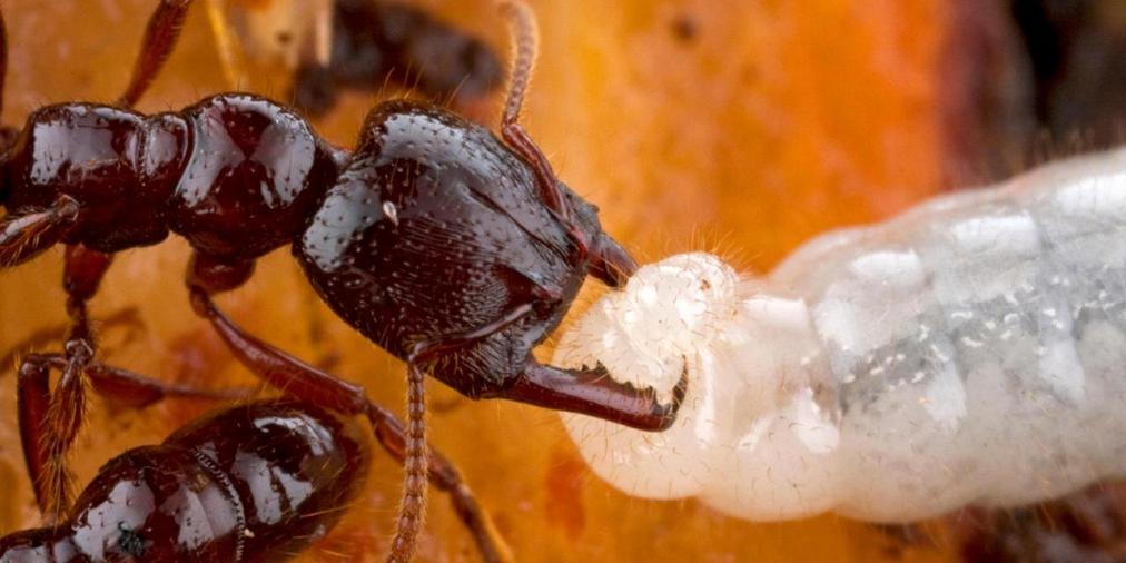 Ants 1a