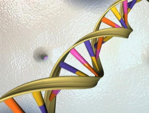 DNA 2b Handout Reuters