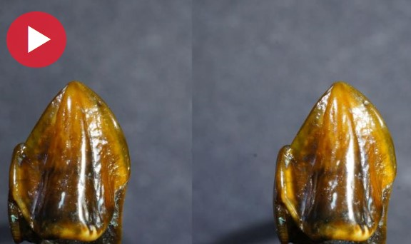Photo of Prehistoric teeth fossils dating back 9.7 million years 'could rewrite human history'
