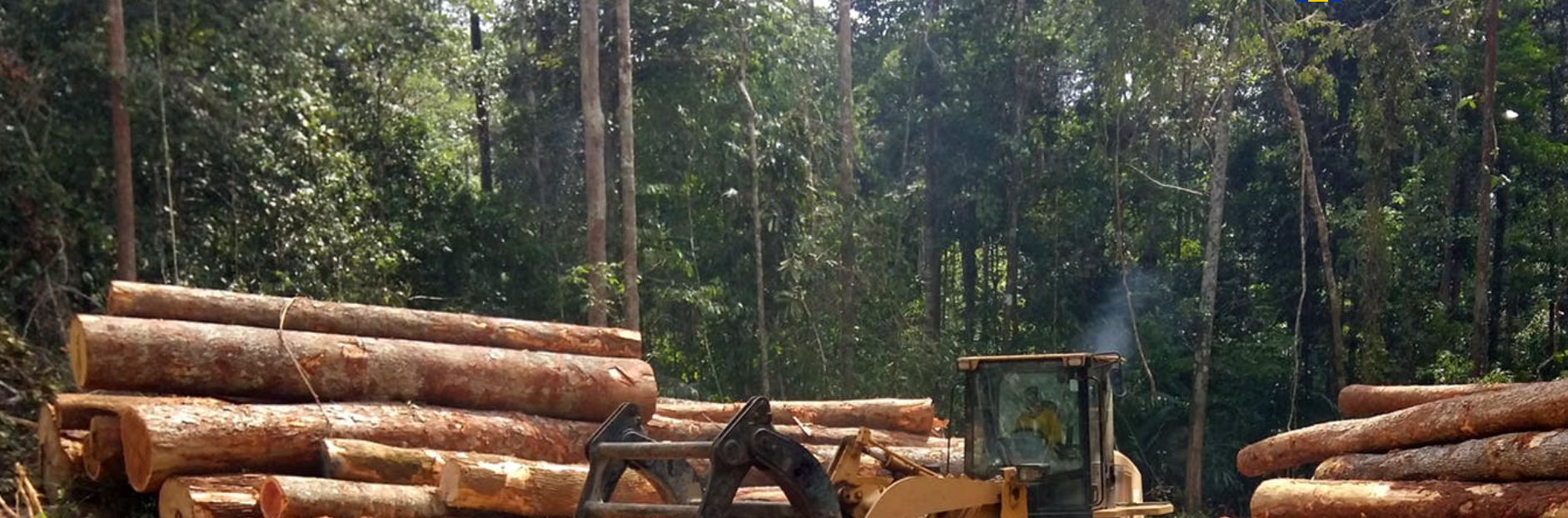 Photo of Message to the EU: you have the chance to stop fuelling devastation in the Amazon