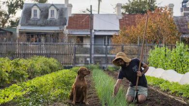 Photo of The new wave of urban farms sprouting strong community connections