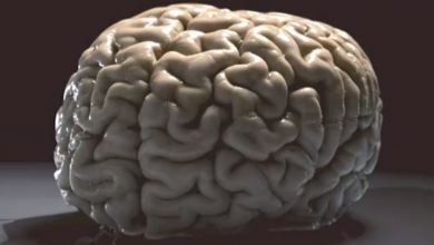 Photo of Will humans keep getting smarter? – Video