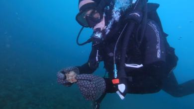 Photo of 'Final frontier of Australian archaeology': Drowned artefacts reveal first underwater heritage sites