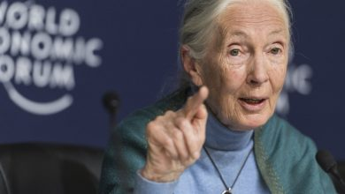 Photo of Jane Goodall: humanity is finished if it fails to adapt after Covid-19