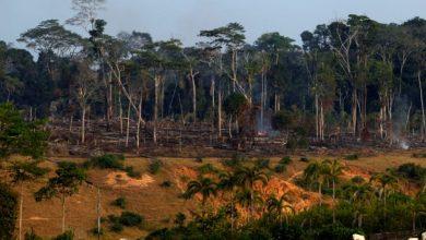 Photo of Selon WWF, 68% de la faune sauvage ont disparu en 50 ans à cause de l'activité humaine