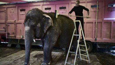 Photo of France announces 'gradual' ban on wild animals in circuses