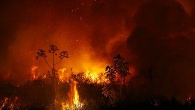 Photo of La Amazonía no es tu museo de historia natural