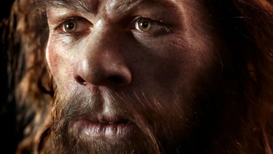 Photo of Did Neanderthals go to war with our ancestors?