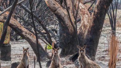 Photo of 3 billion animals were in the bushfires' path.