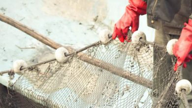 Photo of Fishing industry must do more to tackle human rights abuses – here's where to start