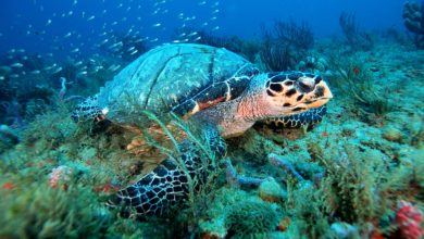 Photo of To Save Nature, We Must Protect 30 Percent of U.S. Ocean