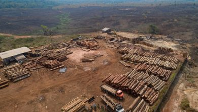 Photo of Deforestation destroyed more than two football fields of Brazil's Amazon a minute last year