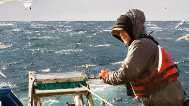 Photo of Why the EU's global fishing activities can't be called sustainable yet