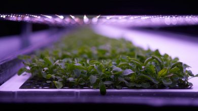 Photo of Vertical farming's sky-high ambitions cut short by EU organic rules