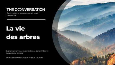 Photo of « La vie des arbres » : un débat à revoir en ligne